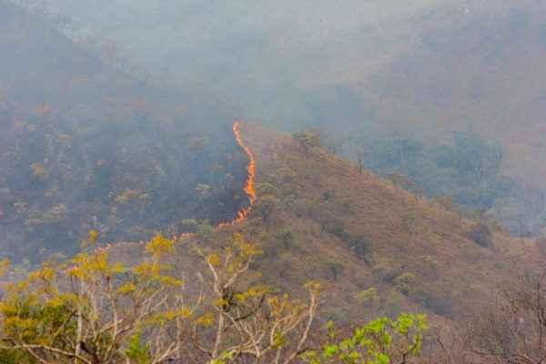 Não é só a Amazônia: cerrado também pega fogo